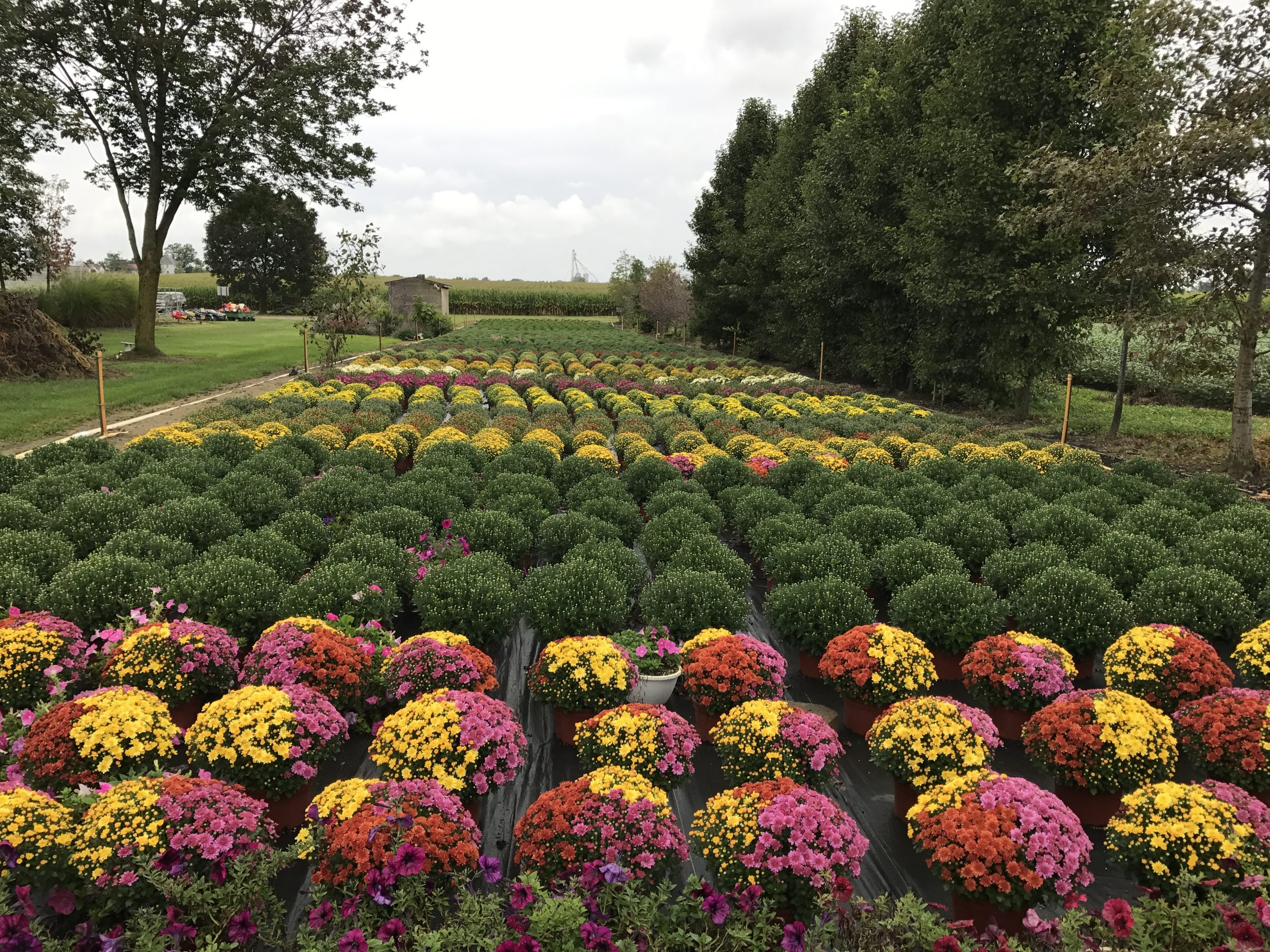 Mums Majestic Nursery and Gardens