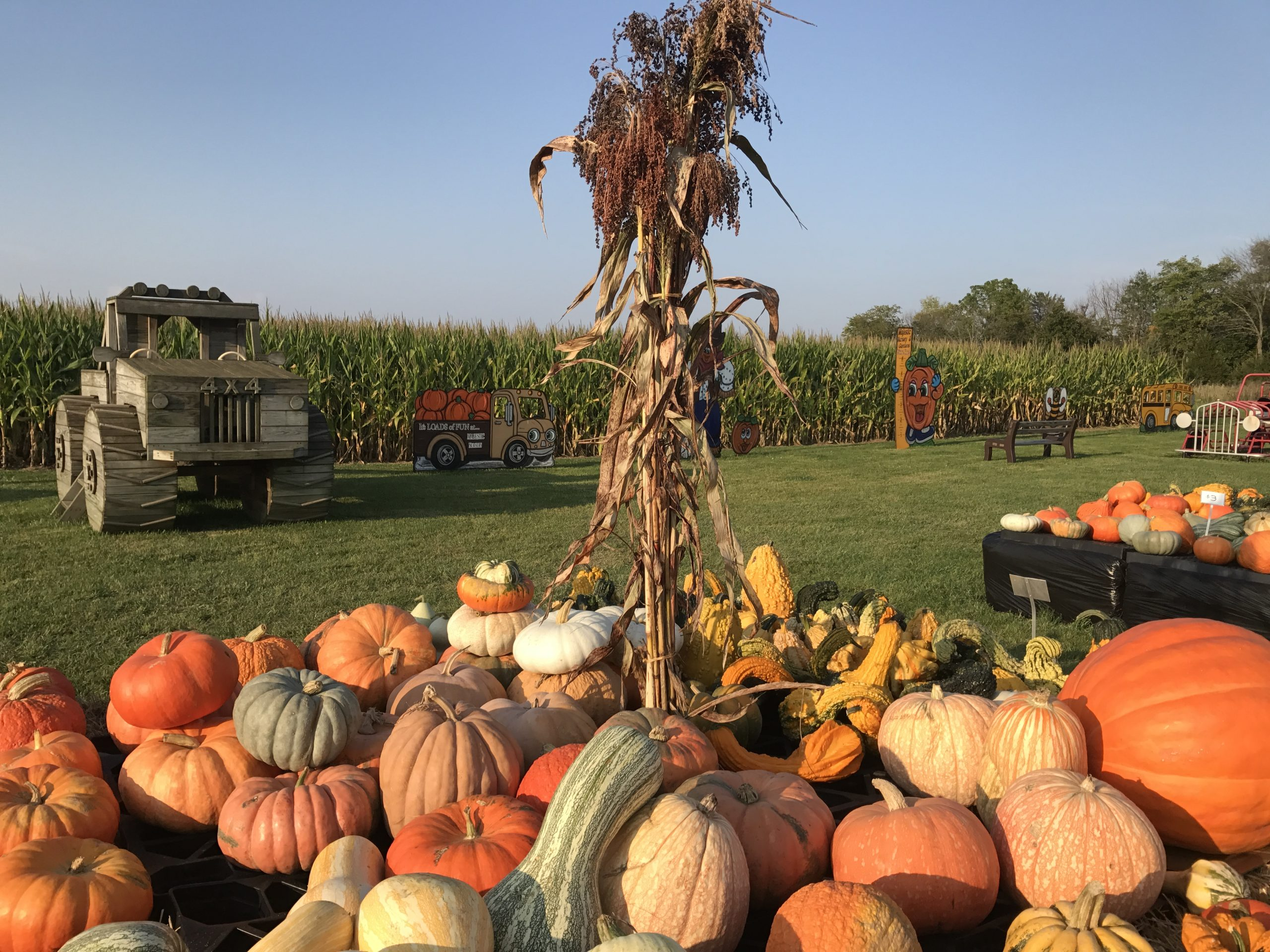 Pumpkins and Corn Majestic Nursery and Gardens