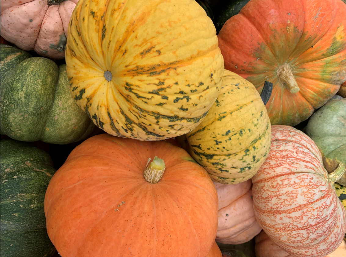 Specialty pumpkins Majestic Nursery and Gardens