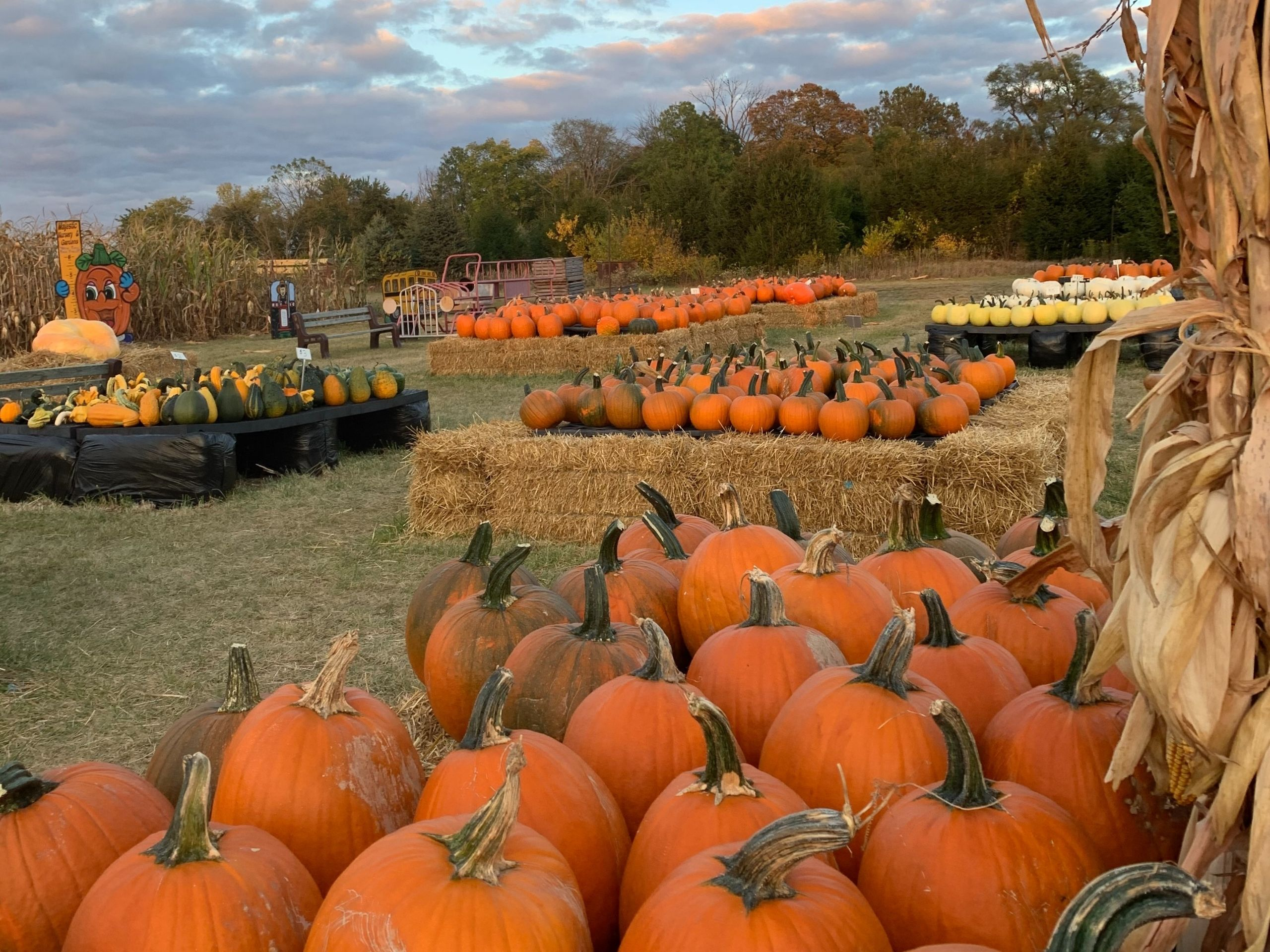 Pumpkin Stands Majestic Nursery & Gardens