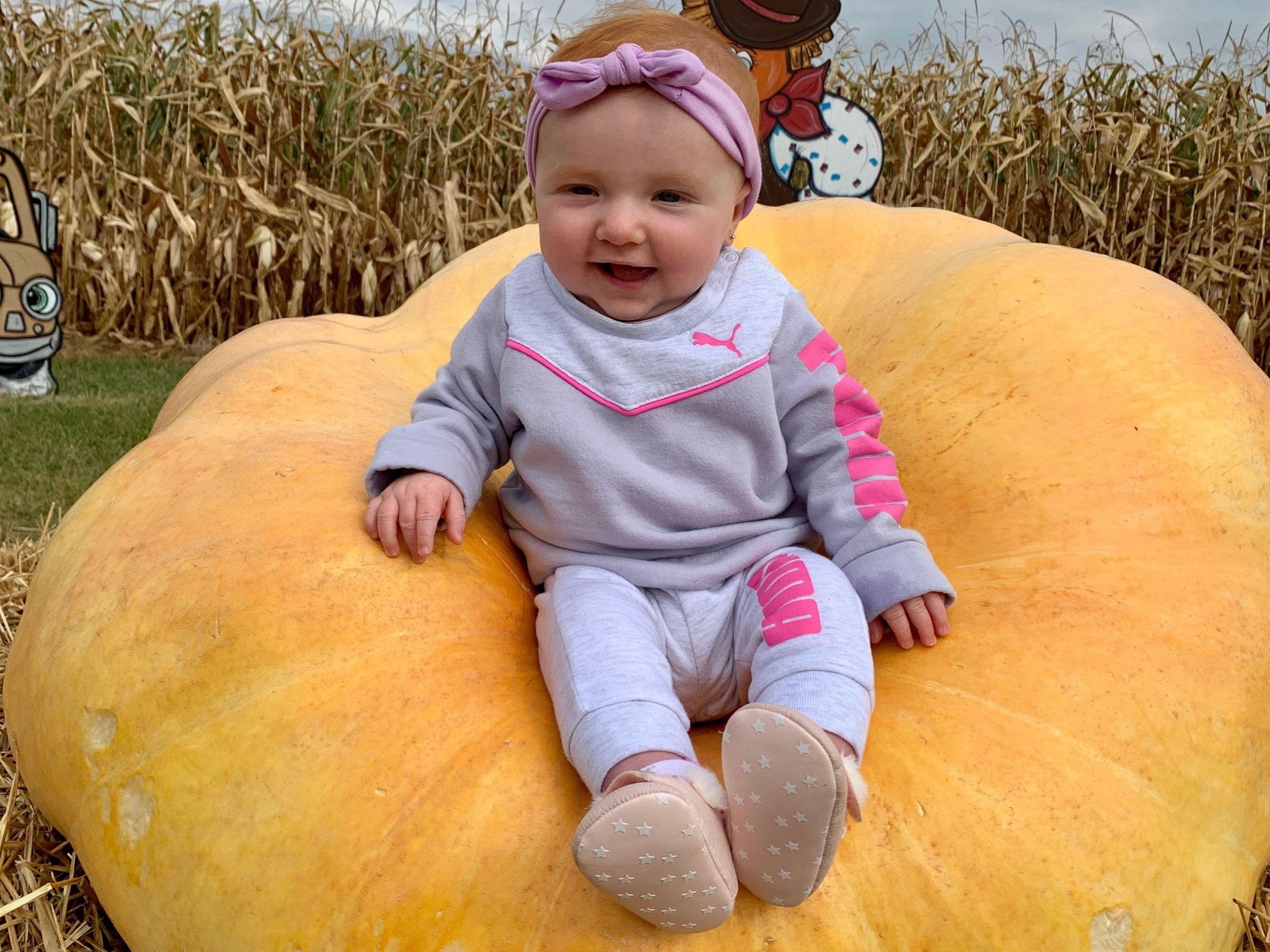 Pumpkin Visitor Majestic Nursery & Gardens
